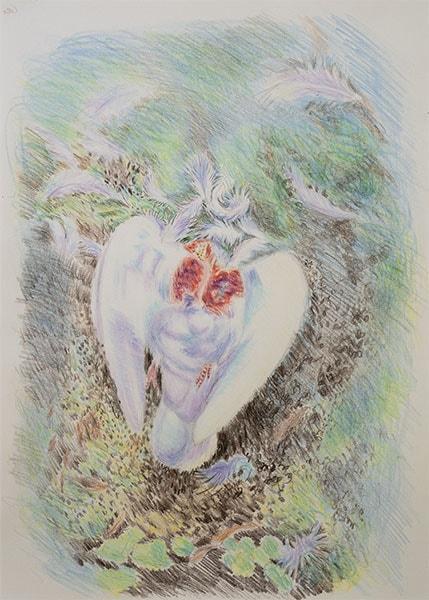 Dove killed by a Sparrowhawk, crayon, 30 x 41 cm by Alexandra Drysdale